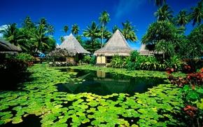 Картинка лето, солнце, озеро, пальмы, Остров, хижины, курорт, кувшинки, Таити