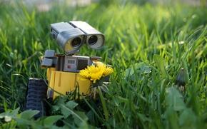 Картинка цветок, трава, природа, одуванчик, газон, игрушка, робот, toy, beautiful, spring, Wall-E, игрушечный мир