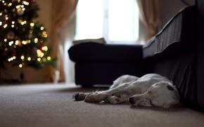 Картинка дом, праздник, собака