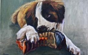 Картинка взгляд, животное, собака, лапы, уши, живопись, ботинок, грызет