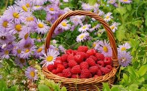 Обои ягоды, корзинка, цветы, малина
