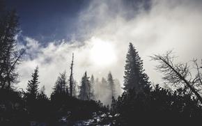 Картинка trees, nature, winter, snow, fog