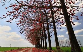 Картинка дорога, поле, осень, небо, листья, деревья