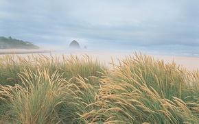 Обои море, 153, берег, пляж, трава