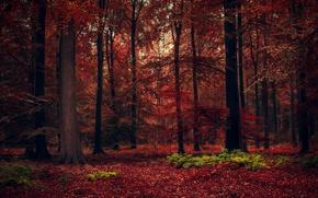 Обои лес, осень, деревья, красота