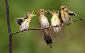 Обои птицы, природа, дети, муха, дерево, еда, крылья, ветка, перья, семья, пища, насекомое, малыши, корм, мама, ...