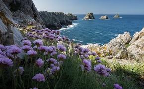 Обои море, цветы, скалы, берег