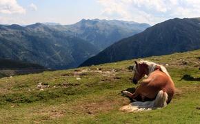 Картинка лето, горы, лошадь