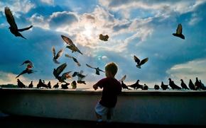 Картинка птицы, небо, мальчик