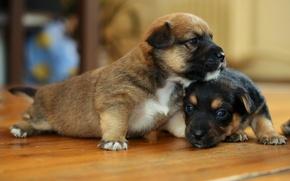 Картинка собаки, дом, щенки