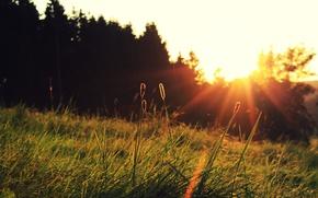 Обои солнце, трава, закат