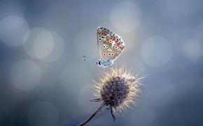 Картинка блики, бабочка, растение, колючка