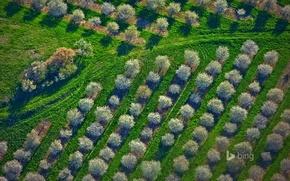 Картинка трава, деревья, весна, Мичиган, панорама, США, вишневый сад, Мейсон Каунти