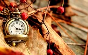 Картинка ягоды, осень, сухие, часы, красные, карманные, листья