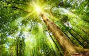 Картинка лес, солнце, лучи, дерево
