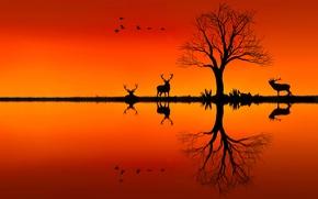 Картинка закат, дерево, олени, силуэты