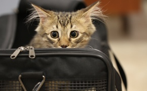 Обои кошка, глаза, кот, испуг