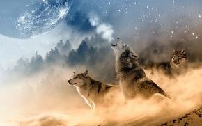 Картинка пейзаж, луна, зимний, три, вой, волка