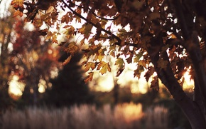Обои солнце, свет, закат, блики, дерево, краски, листва, вечер, клён, травы, конец лета, пора