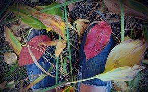 Картинка осень, листья, красный, кеды, август, Vasil Anders