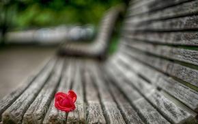 Картинка цветок, макро, скамейка, Роза, лепестки, размытость, лавочка, красная