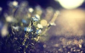 Картинка цветы, макро, земля, свет, природа, растения, дорога, размытость, голубые, солнце, блики, трава, дорожка, камни
