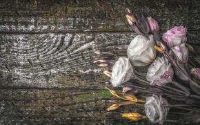 Картинка цветы, букет, бутон, wood, эустома