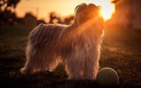 Обои собака, взгляд, свет, друг