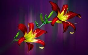 Картинка макро, лепестки, лилия, фон, стебель