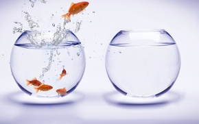 Обои вода, аквариум, рыбки