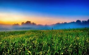 Картинка поле, цветы, туман, утро