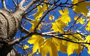 Обои дерево, желтые листья, осень