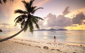 Обои Сейшелы, Пляж, Пальма