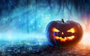 Обои pumpkin, evil face, halloween