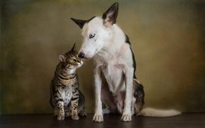 Картинка кошка, кот, стиль, ретро, портрет, собака, обработка, дружба, пара, друзья, обои от lolita777, друганы