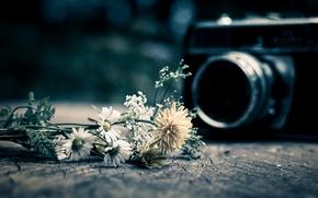 Картинка цветы, фон, widescreen, обои, настроения, камера, фотоаппарат, wallpaper, цветочки, flower, широкоформатные, camera, background, полноэкранные, HD …