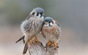 Картинка любовь, птицы, нежность