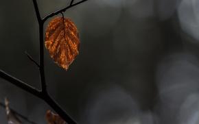 Обои макро, лист, ветка, жёлтый, сухой, осень