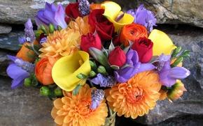 Картинка камни, розы, каллы, Георгины