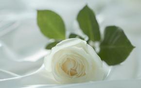 Картинка нежность, макро, белый, размытие, цветок, роза, лепестки, светлый фон, ткань