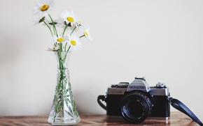 Картинка цветы, фон, камера