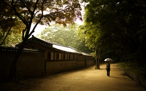 Картинка девушка, стена, зонт, solace, сеул, дворец процветающей добродетели, дворец чхандок, чхандоккун, корея