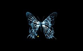 Обои бабочка, кости, рентген, fox, грань, fringe, за гранью