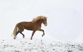 Обои ходьба, ветер, лошадь, снег, зима