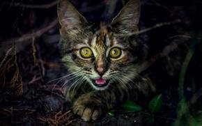 Картинка глаза, взгляд, фон, котёнок, котэ