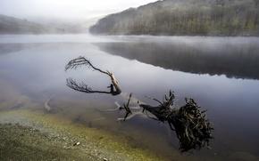 Картинка туман, река, дерево