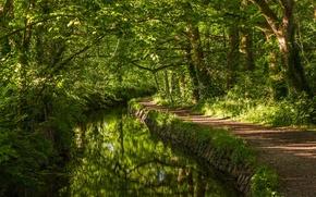 Картинка зелень, лес, деревья, река, Англия, речка, тропинка, England, Западный Девон, West Devon