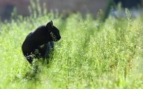 Обои фокус, цвет, чёрный, поле, трава, охота