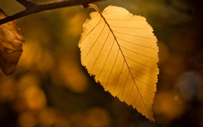 Картинка осень, лист, листик, боке