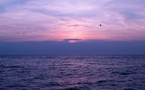 Картинка море, небо, облака, закат, птицы